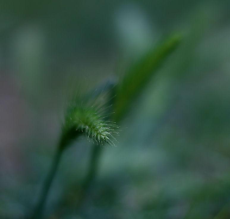 verdeespiga