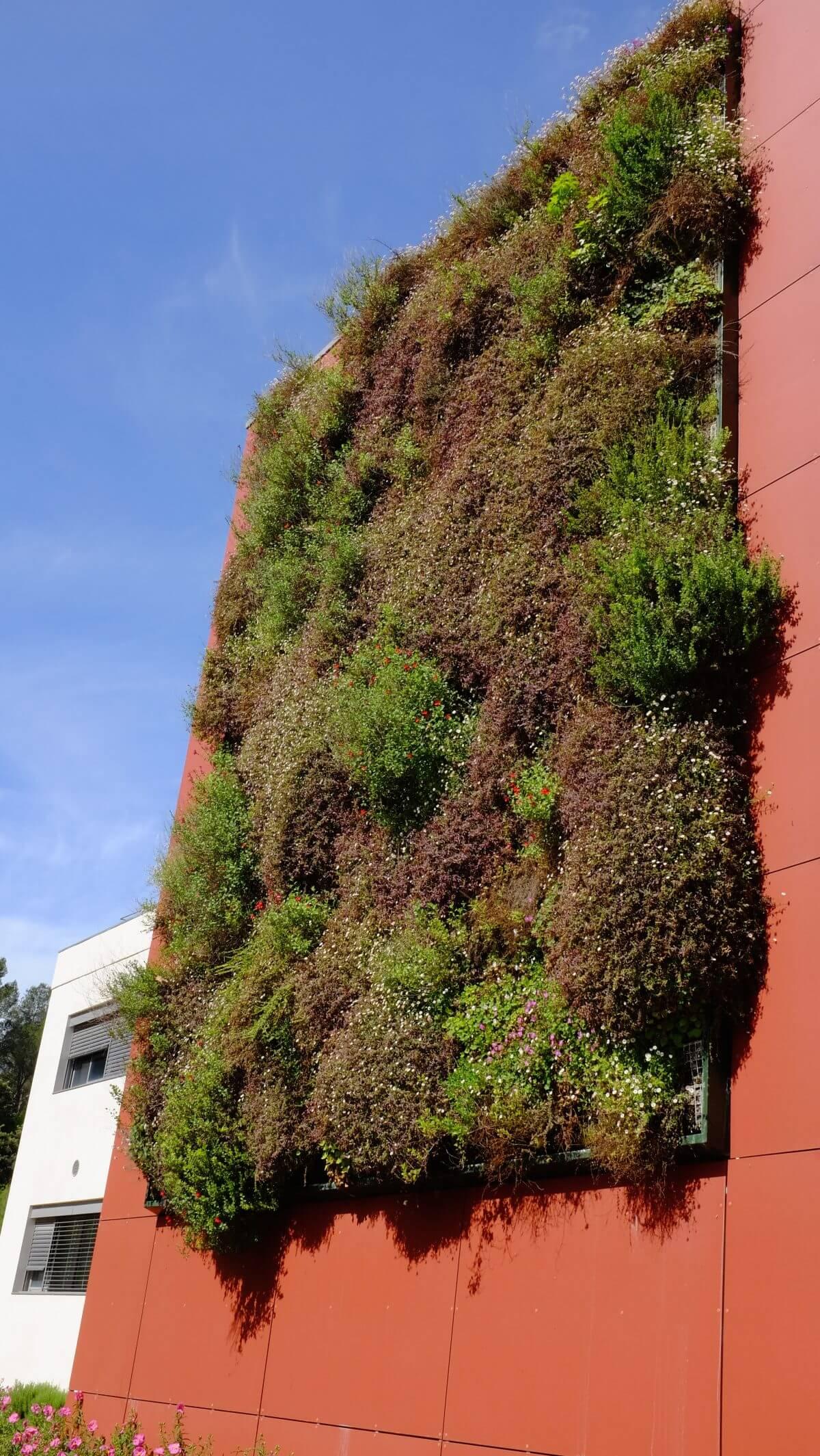 quel prix pour votre mur vegetal