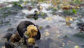 Proposed cuts to Puget Sound restoration could hurt Washington's shellfish industry. (Ingrid Taylar/Flickr)