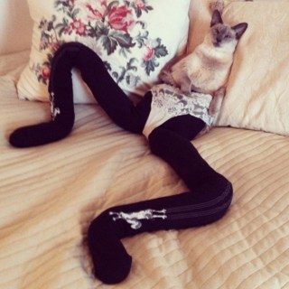 Tight wearing Cats 1