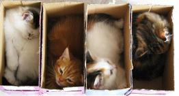 'If It Fits, I Sits' These Cats Prove That No Space Is Too Tight