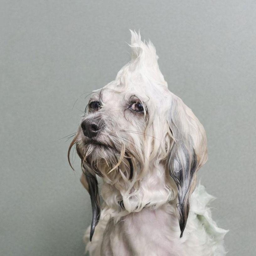 Wet dogs 01
