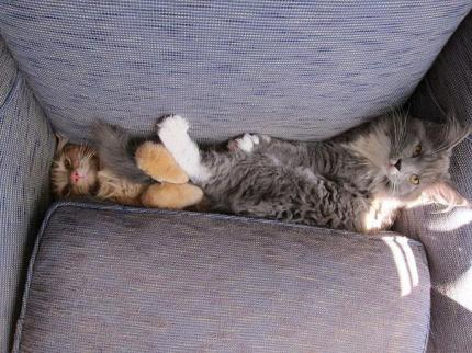 funny-cats-dogs-stuck-furniture-30