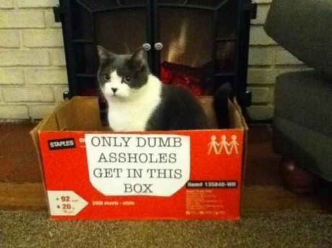 cat-mistakes-04