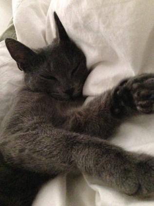 kittencrafts_gracebed