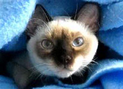 helpcat3