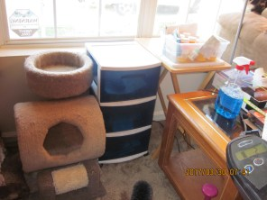 Next to tree #1 is a set of drawers and a folding tray table. These give the cats a perch wider than the window ledge to sit on.