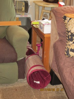 A tunnel is set between my chair and one side table leading from the main section of the living room and the cat corner.