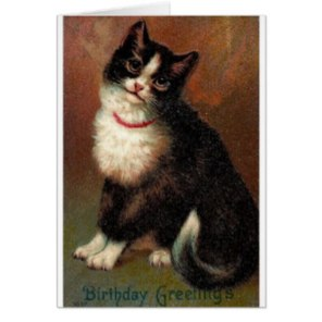 victorian_black_and_white_cat_birthday_card-rb6a3b8a0fd8c495b828c0528f20572ac_xvuat_8byvr_324.2