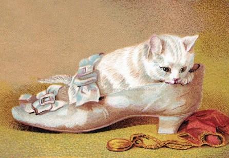 wmshoe-cat-1.2