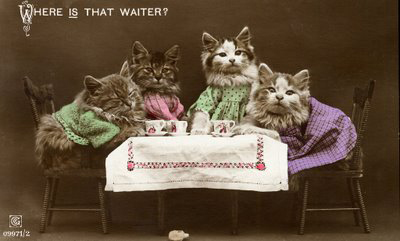 amazing vintage cat's pictures | Kitty Bloger