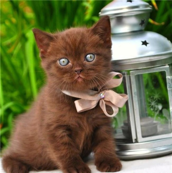 15 Really Cute Kittens Kitty Bloger