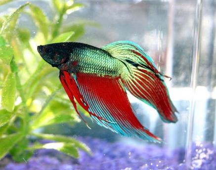 fish, paradise from siam gcleveland