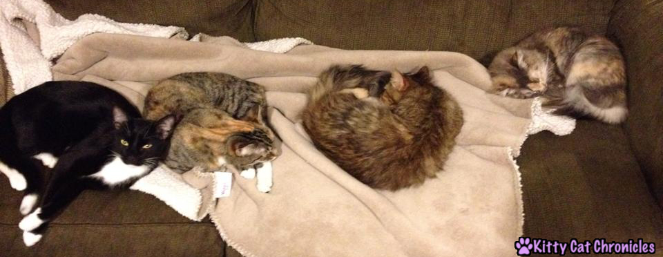 cats laying on couch