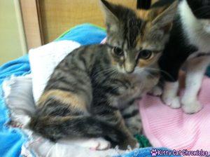 Baby Delilah Cat