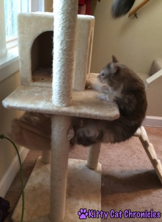 Sophie Climbs the Cat Tree