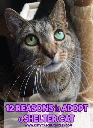 12 Reasons to Adopt a Shelter Cat