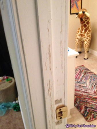 The Talon Scratch Mystery: Perpetrator Revealed!
