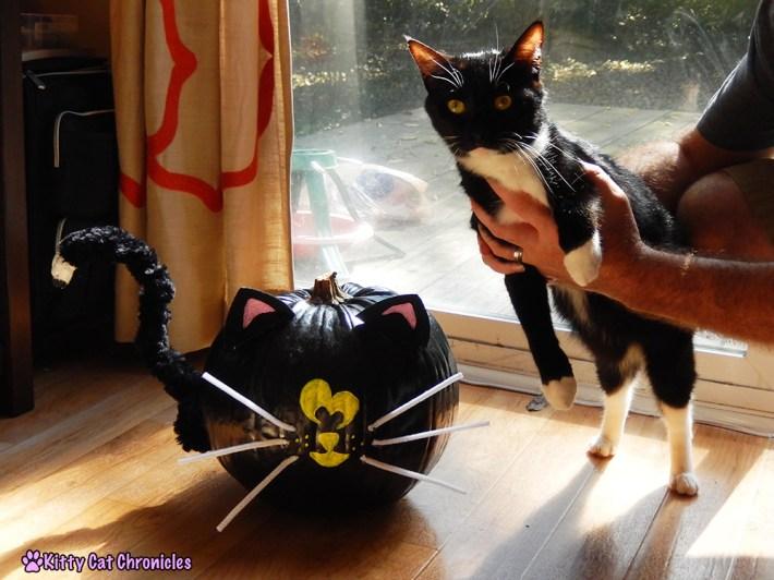 Halloween DIY Project: Painted Cat Pumpkin - black cat pumpkin