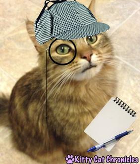 Detective Caster