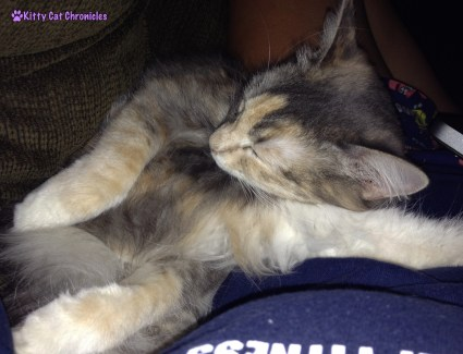 7 More Reasons to Adopt a Shelter Cat - Yoga Moves