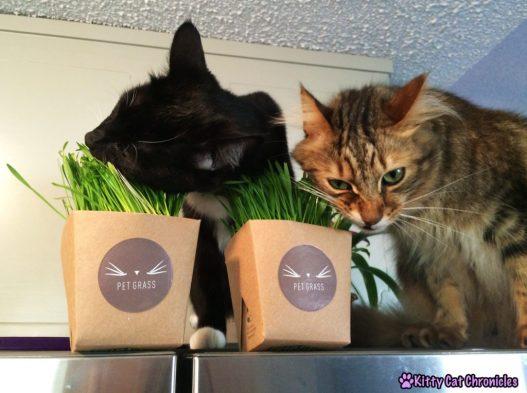 Sampson & Caster - Pet Grass