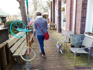Adventure Cat Sophie in Juliette, GA