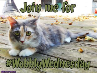 Join me for #WobblyWednesday - CH Kitty