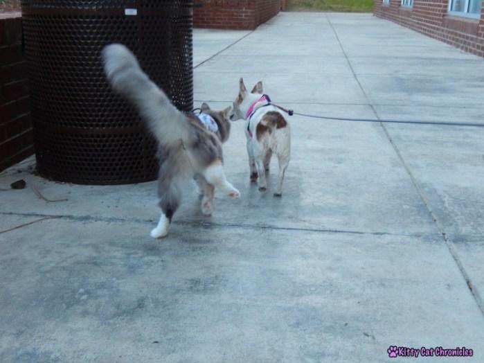 #WobblyWednesday: Sophie & Lucy Go to School!