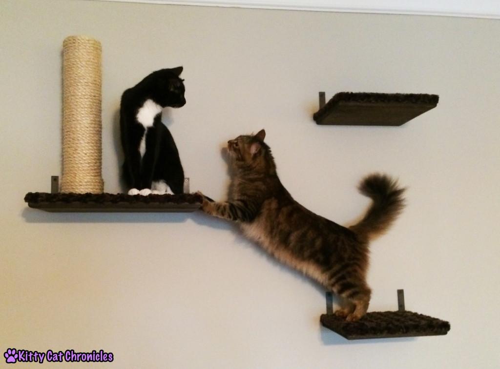 Caster & Sampson - two cats on shelves