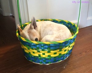 Lucy dog in Easter Basket