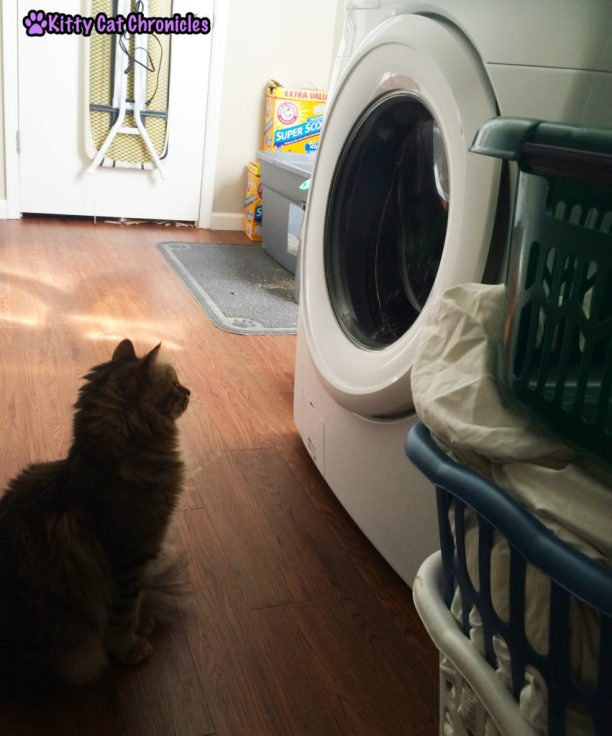 Caster cat and dryer