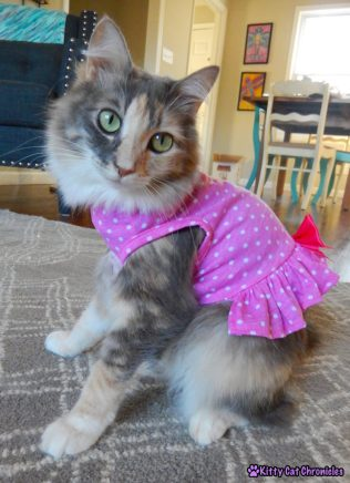 CH Kitty in Pink Dress #WobblyWednesday