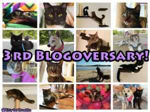 3rd Blogoversary