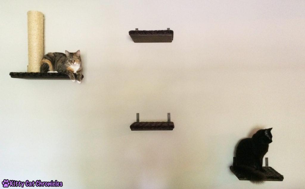 cats on shelves - Shelf Time