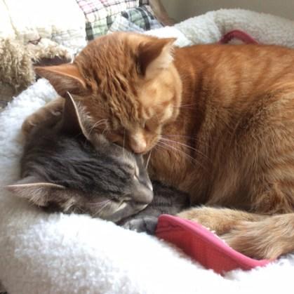 Hug Your Cat Day - Rickey & Mickey