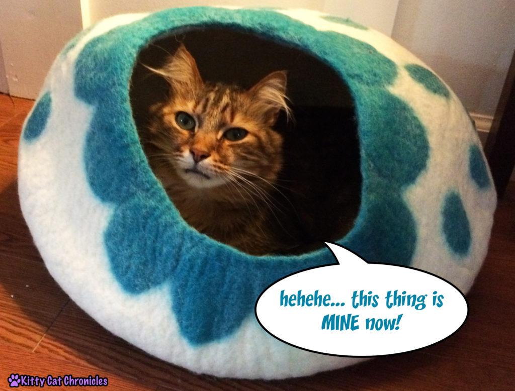 cat in KittiKubbi