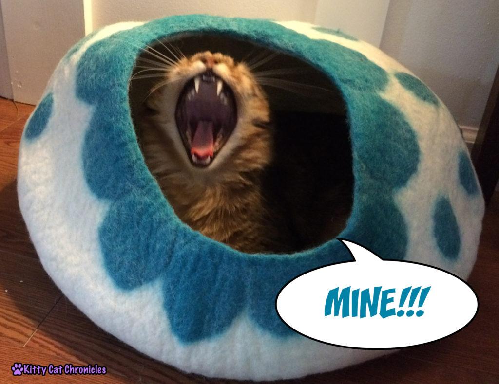 Cat yawning in KittiKubbi