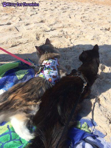 Sophie & Kylo Ren on the beach