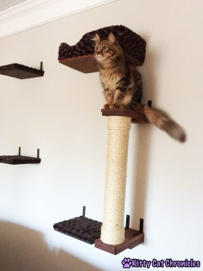 Caster on the Cat Wall