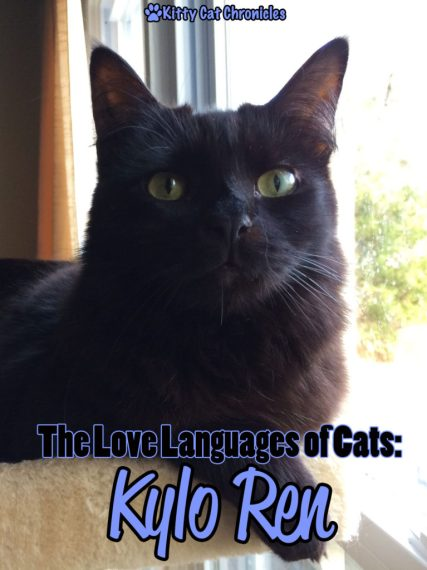 The Love Languages of Cats: Kylo Ren