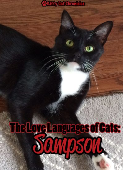 The Love Languages of Cats: Sampson