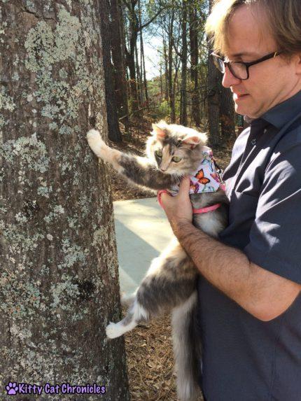 Sophie Climbs a Tree
