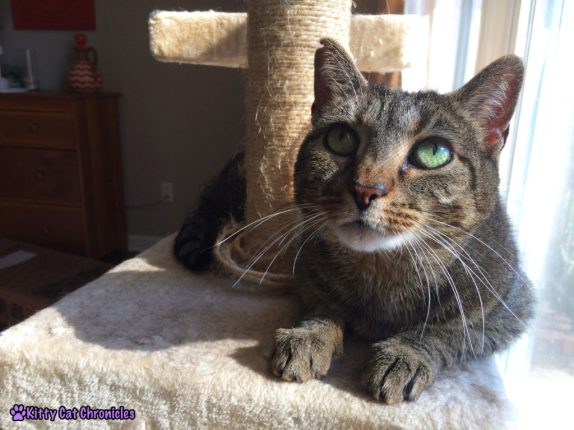 Sassy Cat On a Cat Tree: Is Spring On Its Way Yet?