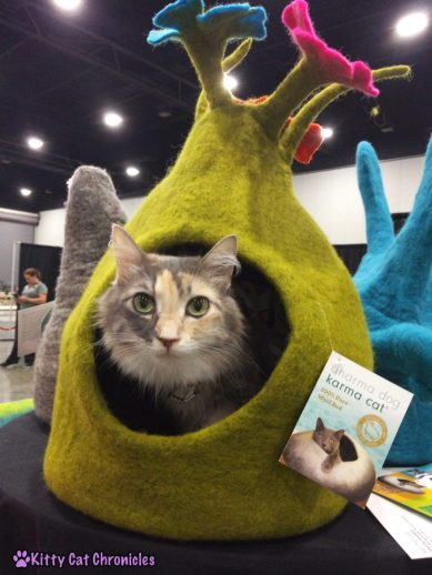 The Ongoing Battle for Sophie's Karma Cat Cave - Sophie in the Cat Style Lounge