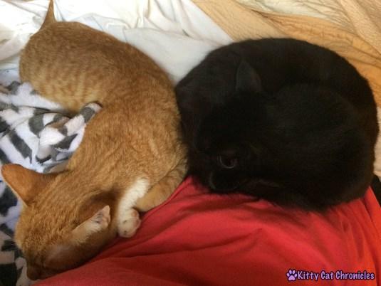 Radagast the Orange and Kylo Ren Snuggling