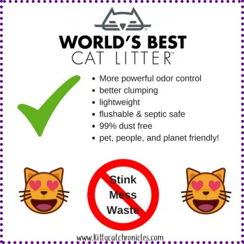 World's Best Cat Litter Zero Mess