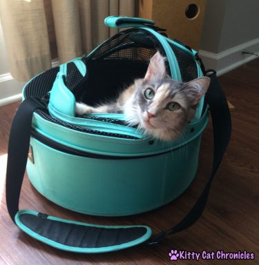 Adventure Cat Travel Guide: Everything You Need! - Sleepypod