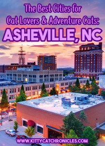 The Best Cities for Cat Lovers & Adventure Cats: Asheville, NC
