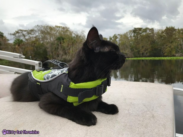 The KCC Adventure Team Tours the St. John's River - Kylo Ren, cat on boat